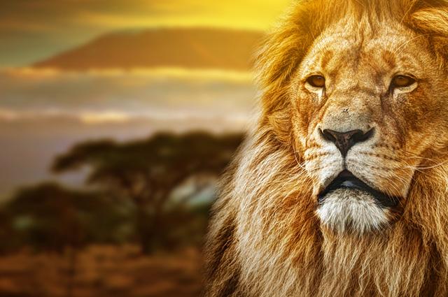 O símbolo do imposto de renda é um leão porque simboliza discrição, bravura e lealdade