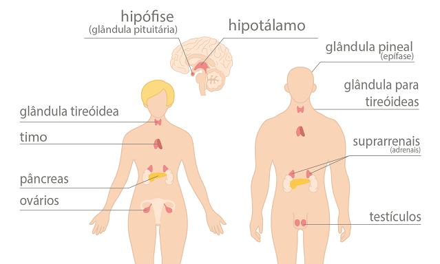 Resultado de imagem para Sistema endócrino