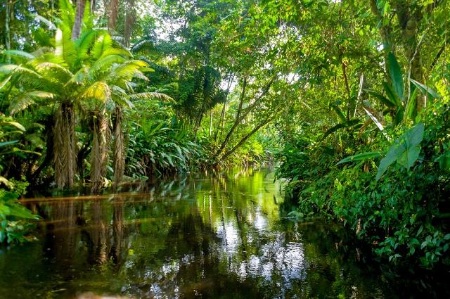 Rio e vegetação da Amazônia