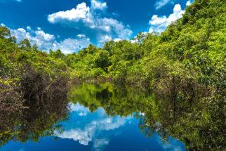 Pantanal: principais características, fauna e flora