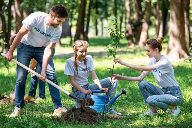 Grupos de estudantes plantando árvore