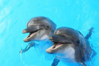 Golfinhos: características, hábitos e curiosidades