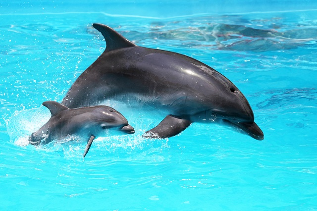 Dolphin with mother