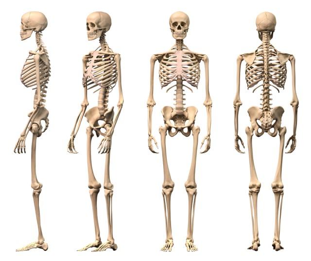 Quatro esqueletos em posições diferentes