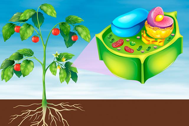 Estrutura de célula vegetal