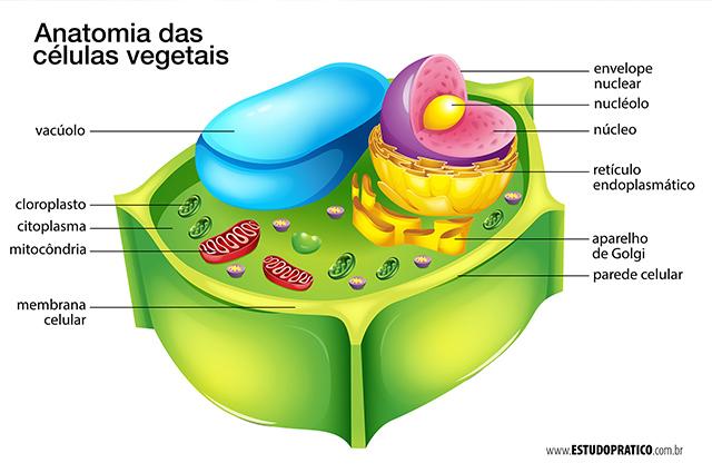 Estrutura da célula vegetal