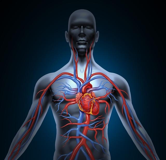 Modelo do sistema cardiovascular