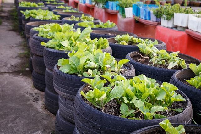 Pneus com plantas