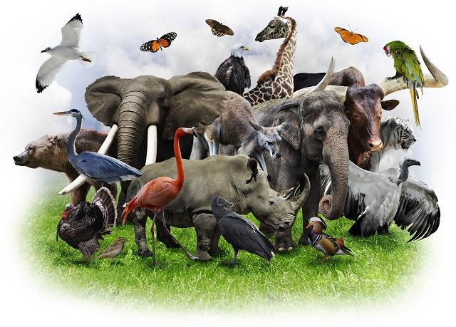 Animais selvagens reunidos