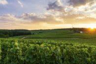 Zona rural: o que é e características dessa área